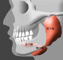 耳下腺リンパ